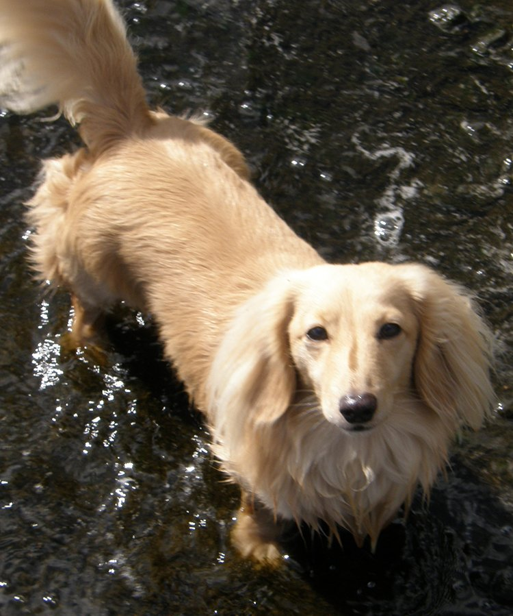 Dog Sitting North Wales | Flintshire | Conwy | Home boarding for dogs