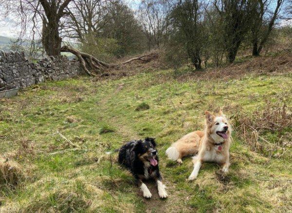 About home boarding Flintshire | Pet Sitting